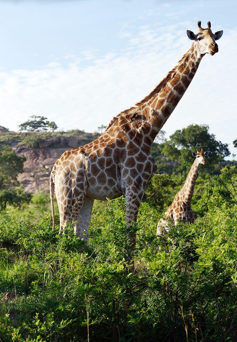 africa // © Judith Klapper