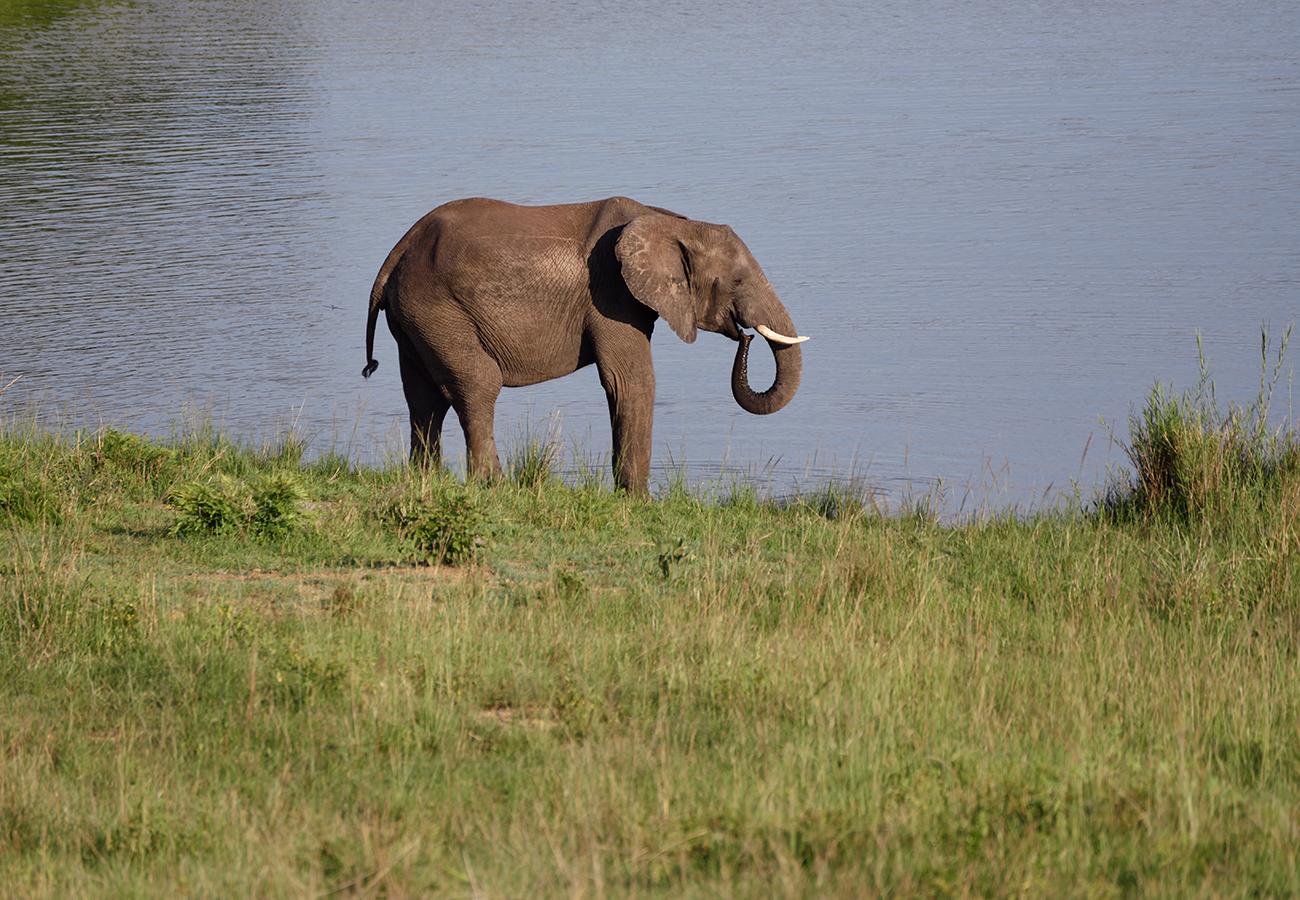 Africa © Judith Klapper